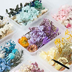 Dried Flowers for Resin with Tweezers Multiple Colorful Real Pressed Dry Flower Leaves Mixed, for DIY Crafts Nail Art Candle Soap Making Phone Case Jewelry Pendant Floral Decors,1 Box