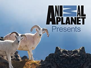 Best animal planet presents Reviews