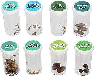 Bonsai Tree Seed Kit | Grow Bonzai at Home | Set of 8 Stay Fresh Vials with Rare Bonsi Seeds | Delonix Regia (Flame Tree), Jacaranda, Metasequoia (Dawn Redwood), and Many More!