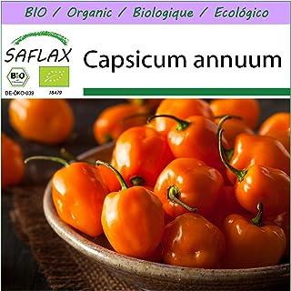 SAFLAX - BIO - Chili - Habanero Orange - 20 Samen - Capsicum annuum