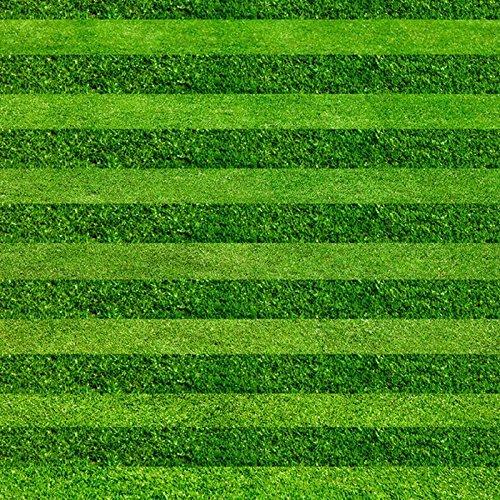 Semences de l'herbe, gazon à feuilles persistantes de semences vivaces, la pelouse du jardin de la famille gérable, 1000 particules / sac