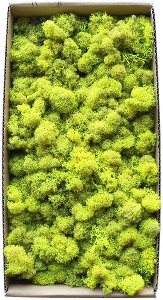 We OFFer at cheap prices YWXKA Natural Preserved Dried Excellent Liche Moss Landscape Finland