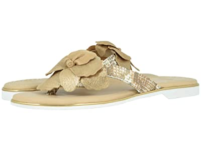 Johnston & Murphy Reanne (Gold Metallic Italian Suede/Snake-Print Italian Leather) Women