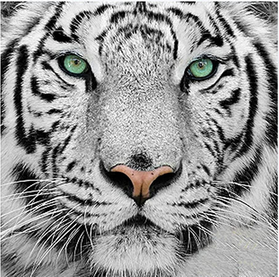 Dorara 5D DIY Diamond Painting, Cross Stitch DIY Diamond Painting,Tiger's gaze,White tiger.12X12 Inches