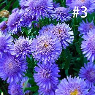 Ultrey Samenshop - 100 Stück Ringelblume Samen Studentenblume Bodendecker Blumensamen Sommerblumen Samen Blütenmeer Saatgut für Garten Beet/Wiesen