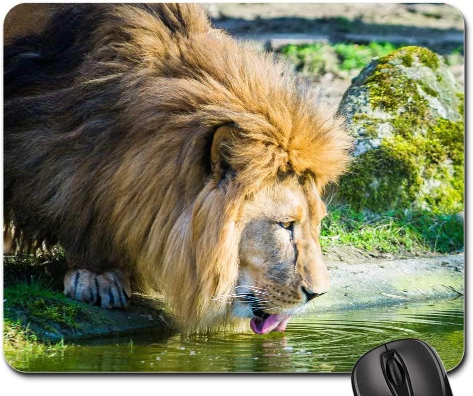 Mouse Pad - 2021 Lion Cat Male Big 1 year warranty Africa Zoo Drink