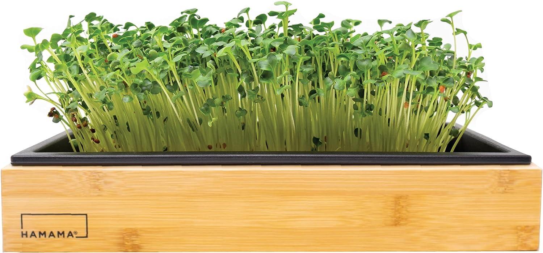 Hamama Home Microgreens Growing Kit & Bamboo Frame, Grow Fresh Micro Greens Indoors Every Week, 30-Second Setup, Just Add Water. Microgreens Tray, Microgreens Seeds. Cooking Gift. 100% Guaranteed