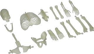 U.S. اسباب بازی USTMU75 16 قطعه درخشش در جعبه اسکلت جعبه شکل استخوان استخوان