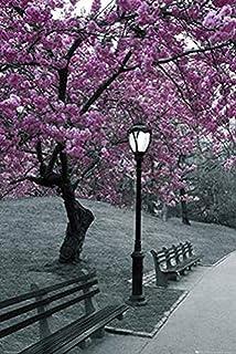 ملصق فني مطبوع عليه عبارة Buyartforless New York Central Park Blossom مقاس 36x24 مطبوع عليه أشجار بلوم بنفسجية باللون الأس...