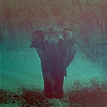 Mejor Elephant Gun Mp3