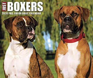 daily boxers