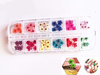 Valuu 3D Nail Art Dried Flowers Sticker 60 Five Petal Flower 12 Colors Natural Real Dry Flower Nail Art Decoration Beauty Nail Stickers for 3D Nail Art Acrylic UV Gel Tips(60 Flowers)