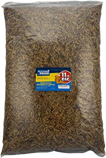 Mealworms by the Pound MBTP Bulk Dried Black Soldier Fly Larvae - Treats for Chickens & Wild Birds (11 Lbs)