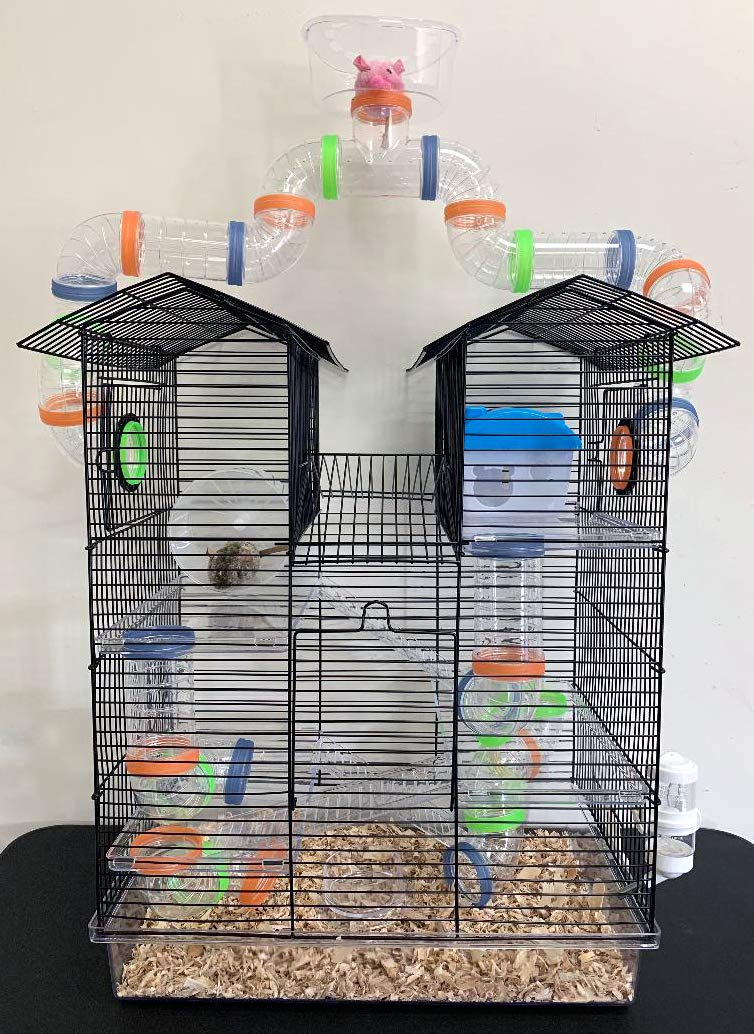 Transparent Habitat Hamster Rodent Exercise