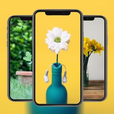Vase Wallpaper HD