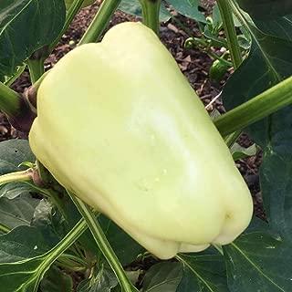Capsicum annum reab de protection: Graines blanc Poivron doux Amkha semences Shoopy Star 25 graines