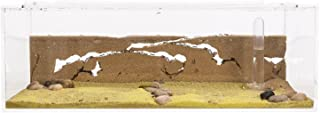 AntHouse - Hormiguero Natural de Arena - Kit Inicio Big Acrílico 30x15x10 cm (Hormigas Gratis)