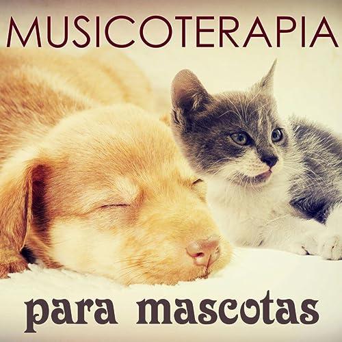 Musicoterapia Mascotas - Musica para Dormir para Perros, Gatos y Todos Animales (Aliviar el