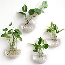 Mkono 4 Pack Wall Hanging Glass Terrariums Planter Flower Vase for Hydroponics Plants, Home Office Living Room Decor, Oblate
