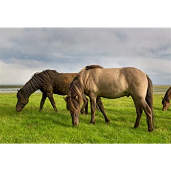 Horses 8x10 FT Photography Backdrop Bay Horse Pacing on The Grass Energetic Noble Character of The Nature Concept Background for Photography Kids Adult Photo Booth Video Shoot Vinyl Studio Props