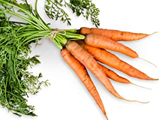 Danvers 126 Half Long Carrot 600 Seeds (Non-GMO) UPC 646263362259 + 2 Plant Markers