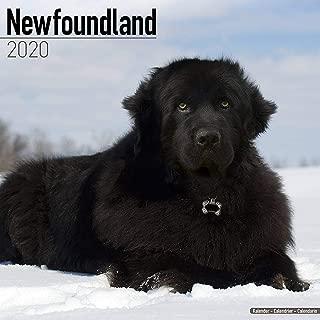 Best newfoundland dog calendar 2019 Reviews