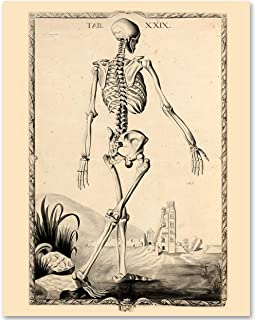 Skeleton - Tab XXIX - 11x14 Unframed Art Print - Makes a Great Gift Under $15 for Medical and Nursing Students