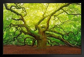 Angel Oak Tree Canopy Charleston South Carolina Photo Black Wood Framed Art Poster 20x14