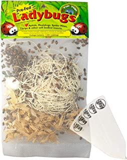 4500 Pre-Fed Live Ladybugs   Guaranteed Live Delivery   Targets Aphids, Moth Eggs, Mites, Scales, Thrips, Leafhoppers, Mealybugs and Other Slow-Moving Insects + THCity Stakes