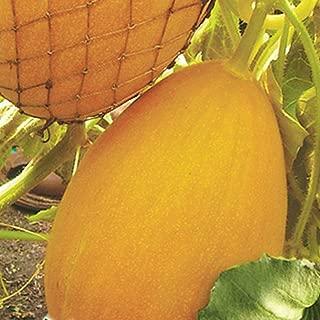 Nikitovka Melon Zvaba 10 Seeds Non GMO Open Pollinated Organically Grown for Garden Planting