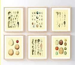 vintage egg prints