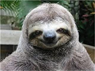Best easy sloth cake Reviews