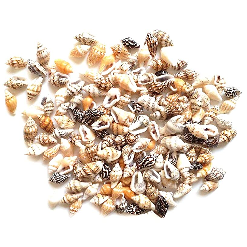 Tiny Miniature Fairy Garden Sea Shell Small Ocean Beach Spiral Seashells 700-800 Pcs Craft Charms Length for Candle Making, Home Decor, Beach Theme Party Wedding Decor, Fish Tank and Vase Filler
