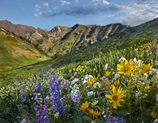 Posterazzi Poster Print Collection Larkspur and Sunflowers Albion Basin Wasatch Range Utah Tim Fitzharris, (22 x 28), Multicolored
