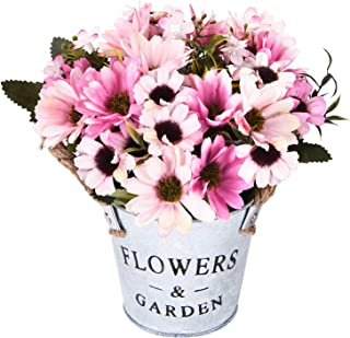 Best potted gerbera daisy Reviews