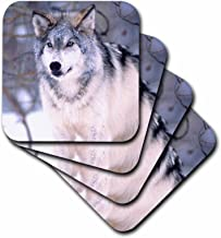 3dRose CST_83899_1 Timber Wolf, Canis Lupus NA02 DNO0319 David Northcott Soft Coasters, Set of 4