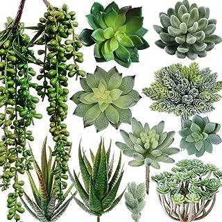 Best hanging succulent arrangement Reviews