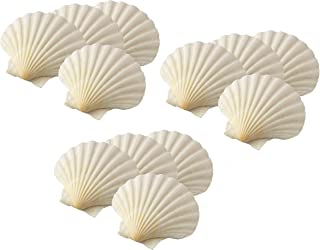 Best scallop shells for sale Reviews