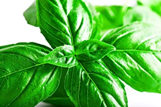 Italian Leaf Basil Seeds   Basil Seeds for Planting Home Outdoor Gardens   Planting Instructions Included   6 Grams Approx...