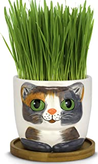 Window Garden - Cat Grass Growing Kit with Kitty Pot Planter - Purrfect for Cat and Pet Lovers.Wheatgrass Snack Includes S...