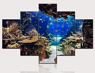 Best shark fish for aquarium images Reviews