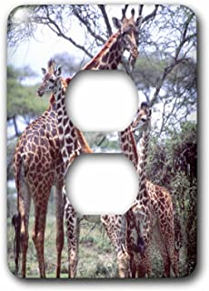 3dRose lsp_83928_6 Giraffe Herd, Tanzania Africa Na02 Dno0375 David Northcott 2 Plug Outlet Cover