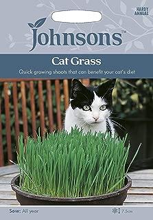 ScoutSeed Johnsons Cat Grass Avena Sativa 25g Siembra para 2020