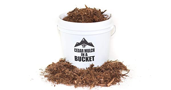 Red Cedar Mulch In A Bucket By Terrafirma 1 Gallon 1 5 Lbs Shredded Red Western Cedar Mulch Natural Red Color With An Amazing Aroma Natural Pest Control Properties Amazon Sg Home