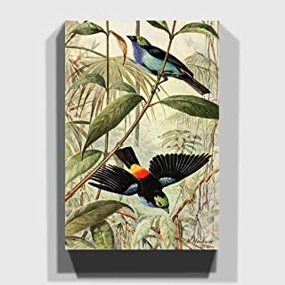 Big Box Art Canvas Print 24 x 16 Inch (60 x 40 cm) Vintage Walter Heubach Paradise Tanager, Wood Multi-Colour, 60 x 40 x 3 cm