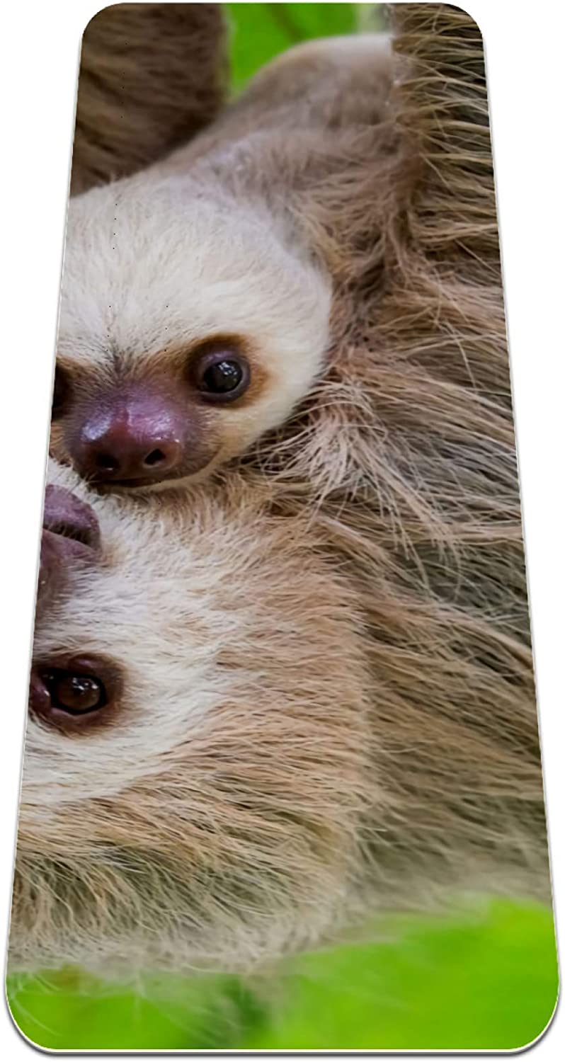 Max 71% OFF Yoga Quality inspection Mat Non Slip TPE Two Sloth Density So High to Avoid Padding