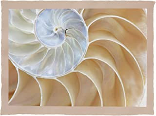 Lantern Press Half Shell Nautilus Closeup Photography A-93635 (60x80 Poly Fleece Thick Plush Blanket)