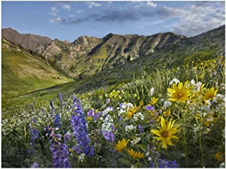 Global Gallery Art on a Budget DP-396499-3040 Tim Fitzharris Larkspur and Sunflowers Albion Basin Wasatch Range Utah Unframed Giclee on Paper Print, 30