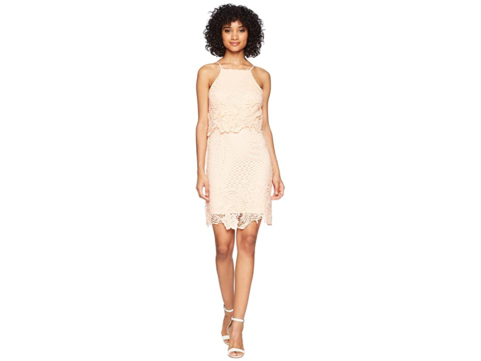 BB Dakota Bryn Bodycon Lace Dress (Salmon) Women