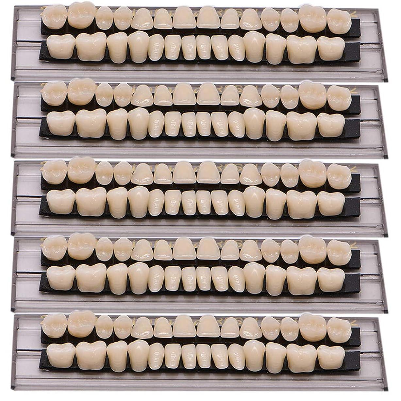 起こりやすいスキャンダラス通行人Oral Dentistry 入れ歯ケア 口腔歯科 歯科用アクリル 樹脂 義歯キット ハロウィンホラーの小道具 ホワイト義歯23 A2 アップ&ダウン歯科28個/セット(A2/5セット)